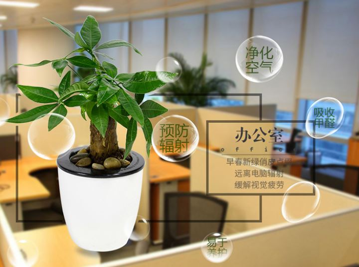 办公室装修,怎么能少得了绿植呢?