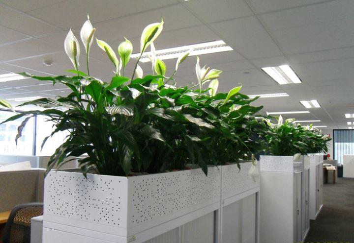 新办公室装修,怎么去甲醛?