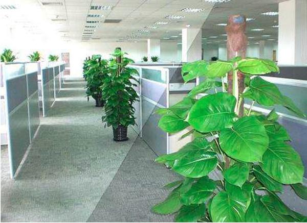 办公室装修时,进行室内绿化需要注意的一些事项