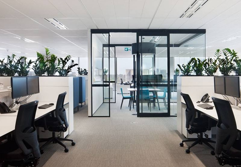 办公室装饰怎能少了绿色植物